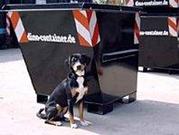 Mini Container zur Müllentsorgung von Dino Container Berlin